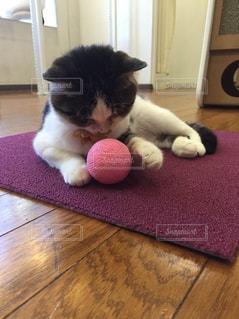 敷物の上に横たわっている猫の写真・画像素材[2857513]
