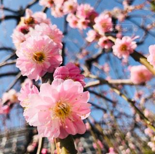 花のクローズアップの写真・画像素材[3039727]