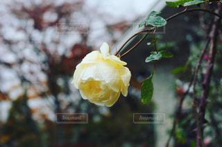 近くの花のアップの写真・画像素材[1763498]