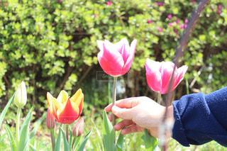 花を持っている手の写真・画像素材[1768286]