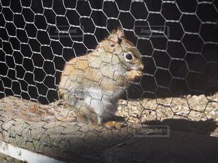 近くに動物のアップの写真・画像素材[1764976]