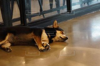 寝てる犬の写真・画像素材[1764299]