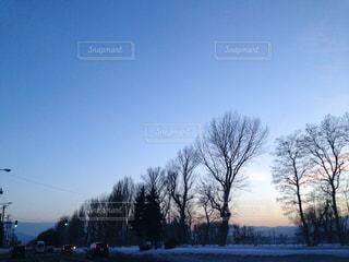 夕方の防風林と積雪。の写真・画像素材[1767727]