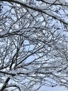 雪の木の写真・画像素材[1767730]