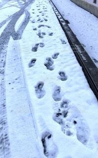 雪についた足跡の写真・画像素材[4052214]