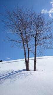 冬の木の写真・画像素材[1766177]