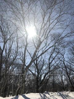 冬の森の写真・画像素材[1773427]