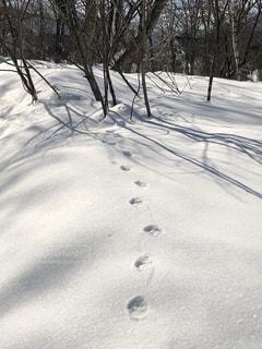 雪の中の足跡の写真・画像素材[1773431]