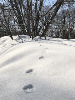 雪の中の足跡の写真・画像素材[1773432]