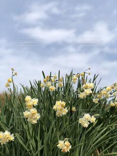 春の訪れの写真・画像素材[1804694]