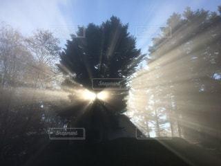 森に差し込む朝日の写真・画像素材[3397632]