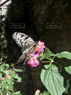 近くの花のアップの写真・画像素材[1767151]