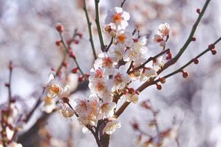 近くの花のアップの写真・画像素材[1788326]