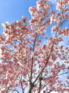 桜もどきの写真・画像素材[1861603]