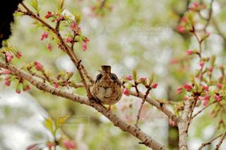 木の枝にとまる小鳥の写真・画像素材[1873983]