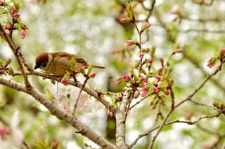 木の枝にとまる小鳥の写真・画像素材[1873984]