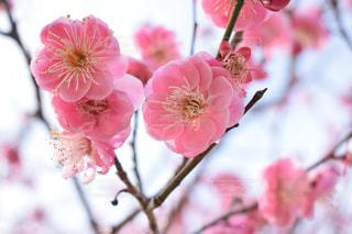 春の写真・画像素材[1812069]