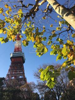 東京タワーの写真・画像素材[1775811]