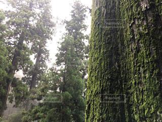 木の写真・画像素材[2374374]
