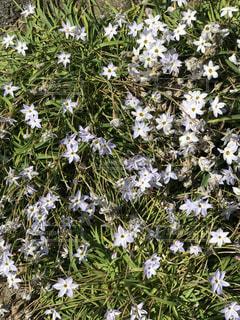 近くの花のアップの写真・画像素材[1771200]