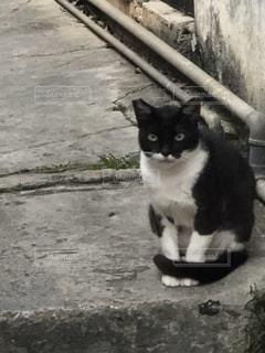 ベンチに座っている黒猫の写真・画像素材[2182010]