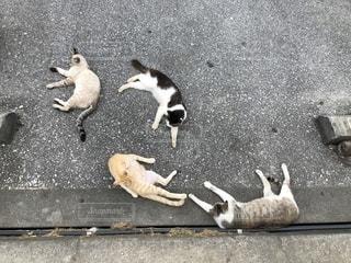 駐車場の上に横たわっている猫の写真・画像素材[2182012]