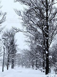 雪に覆われた木の写真・画像素材[1782371]