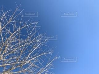 青空と木の写真・画像素材[1809126]