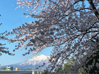 桜と山の写真・画像素材[2080456]