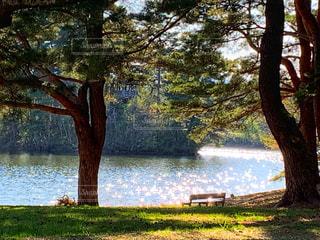 公園の湖の写真・画像素材[2108287]