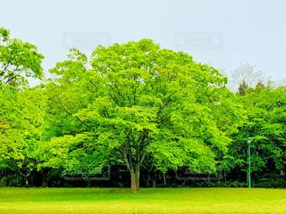 木の写真・画像素材[3235060]