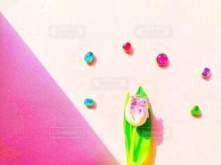 チューリップと宝石のようなマグネットの写真・画像素材[4217999]