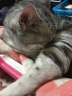 猫の写真・画像素材[65295]