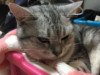 猫の写真・画像素材[65304]