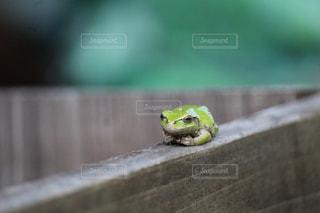 テーブルの上に座るカエルの写真・画像素材[2183606]