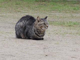 何かを見ている猫の写真・画像素材[1773762]