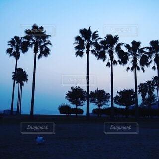 ヤシの木 うさぎの写真・画像素材[4345516]