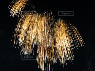 空に花火の写真・画像素材[1772780]