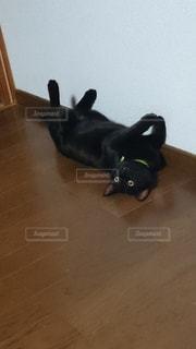 びっくりする猫の写真・画像素材[1781524]