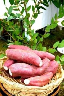 Basket full of sweet potatoの写真・画像素材[2508254]