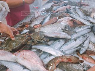 魚の詰め放題の写真・画像素材[1777514]