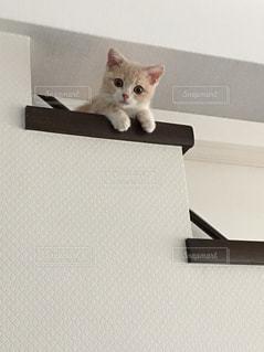階段と子猫の写真・画像素材[1811328]