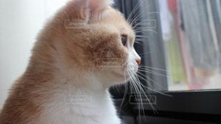 窓を見る子猫の写真・画像素材[1823387]