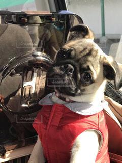 愛犬とドライブの写真・画像素材[3969038]