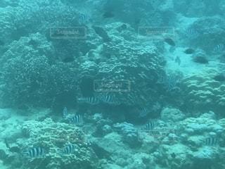 海中展望船から見た魚たちの写真・画像素材[1787487]