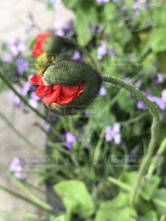 花食い怪獣の写真・画像素材[2111498]