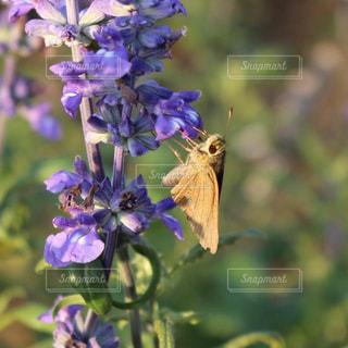 花とチョウの写真・画像素材[2607569]