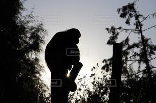 木の上のサルのシルエットの写真・画像素材[2715738]