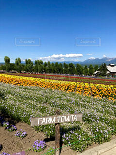 虹色の花畑の写真・画像素材[1787096]