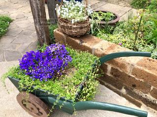 素敵な花ぐるまの写真・画像素材[2116348]